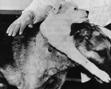 Demikhov's two-headed dog