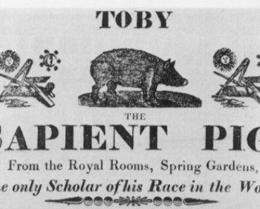 Toby The Sapient Pig, 1817 [Public domain], via Wikimedia Commons