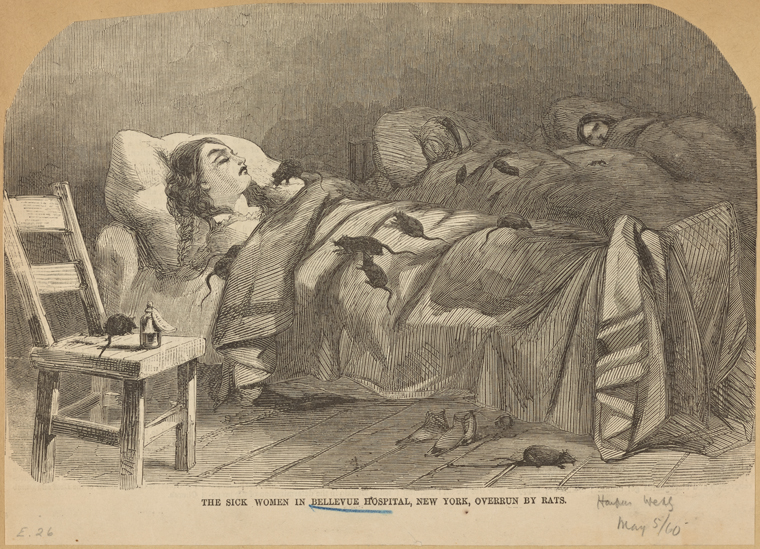 """Hopefully Lottie Fowler had spirits to help her stay at Bellevue be more pleasant. Image credit: Irma and Paul Milstein Division of United States History, Local History and Genealogy, The New York Public Library. """"The sick women in Bellevue Hospital, New York, overrun by rats"""" The New York Public Library Digital Collections. 1860-05-05."""