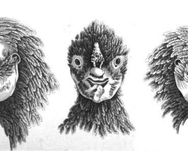 A hen with a human face, from Kirby's Wonderful and Eccentric Museum, Vol. 6.